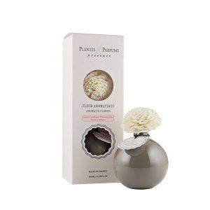 fleur aromatique gourmandise provencale