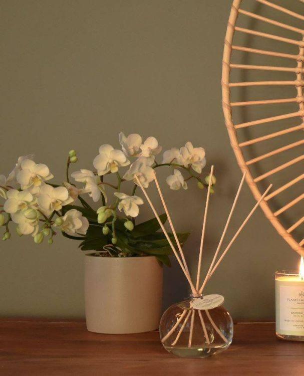 bouquet-parfume